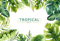 stock image of  hand drawn watercolor tropical plants background. exotic palm leaves, jungle tree, brazil tropic borany elements