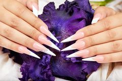 stock image of  hands with long artificial french manicured nails and a purple iris flower
