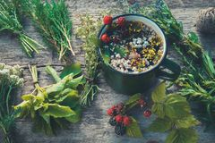 stock image of  healthy herbal tea in enameled mug and bunches of healing herbs.