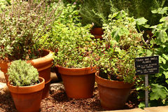 stock image of  herb garden