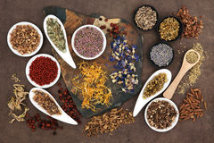 stock image of  herbal medicine