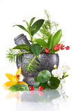 stock image of  herbs and mortar