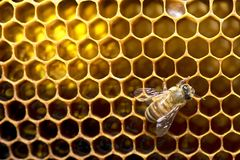stock image of  honey bees on bee hive in thailand and southeast asia.