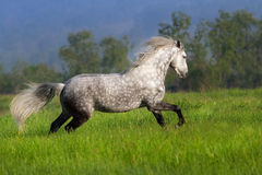 stock image of  horse with long mane run