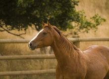 stock image of  horse torso
