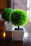 stock image of  indoor plants