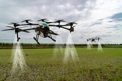 stock image of  iot smart agriculture industry 4.0 concept, drone in precision farm use for spray a water, fertilizer or chemical to the field,