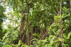 stock image of  jungle forest, abundant vegetation