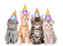 stock image of  large group of small cats with birthday hats. isolated on white