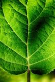 stock image of  leaf closeup