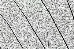 stock image of  leaf structure detail