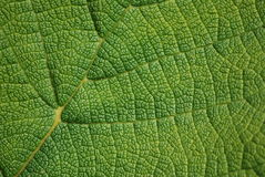 stock image of  leaf texture