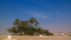 stock image of  legendary tree of life, bahrain desert