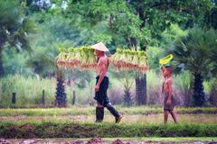 stock image of  lifestyle of southeast asian people in the field countryside thailand ,farther and son in rice fields after work and so happy.