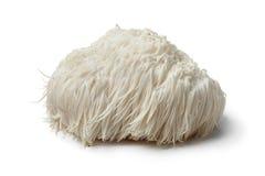 stock image of  lions mane mushroom