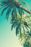 stock image of  looking up perspective on row of palm trees on toned light turquoise sky background. 60s vintage style copy space