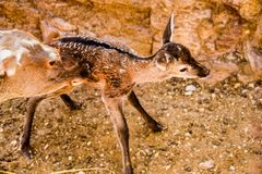 stock image of  the maternal instinct of the deer
