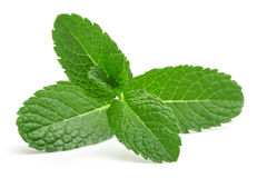 stock image of  mint leaves