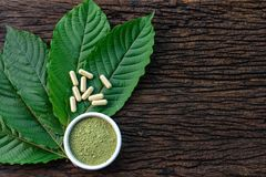 stock image of  mitragyna speciosa or kratom leaves with medicinal products in capsules and powder in white ceramic bowl and wooden table