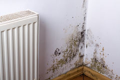 stock image of  mold problem in home.