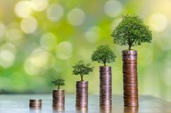 stock image of  money growth saving money. upper tree coins to shown concept of growing business