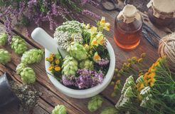 stock image of  mortar of medicinal herbs, healthy plants, bottle of tincture or infusion. top view.