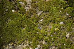 stock image of  mossy ground