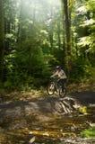 stock image of  mountain biker