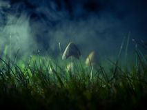 stock image of  mushroom in a foggy night