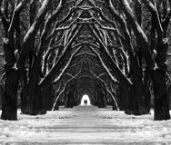 stock image of  mystic path