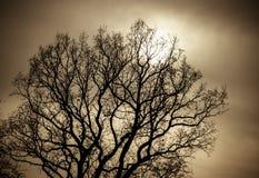stock image of  mystical tree