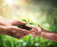 stock image of  old man giving young plant to a child - environment protection