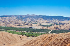 stock image of  orange grove from above