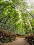 stock image of  path to bamboo forest, arashiyama, kyoto, japan