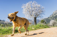 stock image of  pet animals, dogs