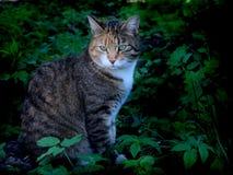 stock image of  domestic cat