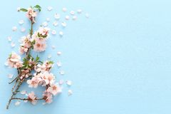 stock image of  photo of spring white cherry blossom tree on blue wooden background. view from above, flat lay.