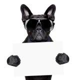 stock image of  placard dog
