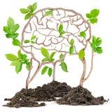 stock image of  plant brain