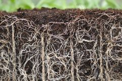 stock image of  plant roots