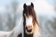 stock image of  portrait of brown, white and blonde horse