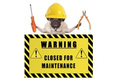 stock image of  pug dog with constructor safety helmet holding pliers and screwdriver with yellow warning sign saying closed for maintenance