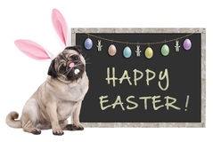 stock image of  pug puppy dog with bunny ears diadem sitting next to chalkboard sign with text happy easter and decoration, on white background