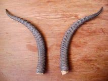 stock image of  ram horn