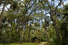stock image of  the recreation area in the ocala national forest located in juniper springs florida