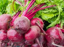 stock image of  red beets