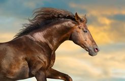 stock image of  red horse with long mane