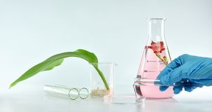 stock image of  researcher mixing organic natural extraction, pharmacist formulating skincare cosmetics from flower plant essence.