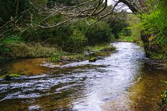 stock image of  river nar running through the woods.