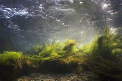 stock image of  underwater scenery, underwater river habitat